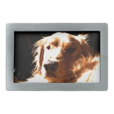 #Golden Retriever In Sunlight Belt Buckle - #golden #retriever #puppy #retrievers #dog #dogs #pet #pets #goldenretriever