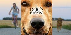 BOYCOTT du film Mes vies de chien / BOYCOTT A dog's purpose