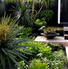 Canary Islands Spa Garden by Amphibian Designs _ Amphibian Designs - James Wong & David Cubero Tropical Garden Design, Tropical Landscaping, Modern Landscaping, Backyard Landscaping, Tropical Gardens, Small Gardens, Outdoor Gardens, Garden Architecture, Contemporary Garden