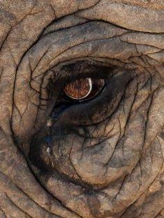 "Eugene TullekenAddo Elephant National Park - The Home of the ""BIG 7"""