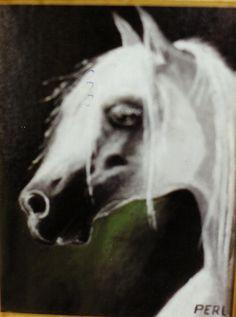 cavallo arabo pirouet