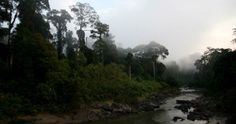 Venturing through the Danum Valley's dense and lively rain forests feels like looking back in time. (Miki Meek)