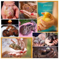 Precious and adorable  ✨