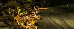 Herbstlaub im Sternenstaub  autumn leaves in stardust  № 2