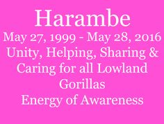 Harambe Gorilla's Message - Faye Rogers - Animal Communication - New Zealand Animal Communication, Take Me Over, Unity, Insight, Messages, Feelings, Text Posts, Text Conversations