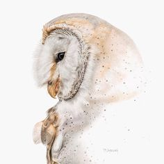 GHOST OWL BY MARTIN AVELING