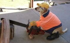 Just A Dog With A Chainsaw