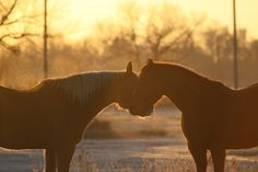 http://365project.org/horselover/365/2012-02-06