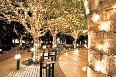 Christmas lights christmas lights decorations chistmas tree
