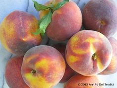 Peaches ~ Fancy Lady variety ~ The first freestone peach of the season. Photo © 2013 Ann M. Del Tredici