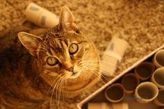 Voerpuzzels voor je kat kun je in allerlei vormen en maten kopen. Toch is zelf maken net zo makkelijk! Lees deze DIY om zelf een leuke voerpuzzel te maken!