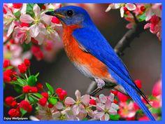 Oiseaux - Buscar con Google