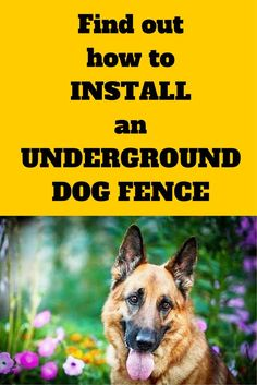 How to install an underground dog fence. Find out the tips and tricks that will save you time and headache. Diy Dog Fence, Invisible Fence, Dog Anxiety, Dog Hacks, Old Dogs, Dog Training Tips, Potty Training, Dog Life, Puppies