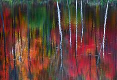 Peter LIK :: One, 2010 [captures the reflections made around a riverbank]