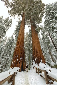 Sequoia National Park in California - Winter is the perfect time to visit! Places Around The World, The Places Youll Go, Places To See, Around The Worlds, Road Trip Usa, Beautiful World, Beautiful Places, Us National Parks, Fauna