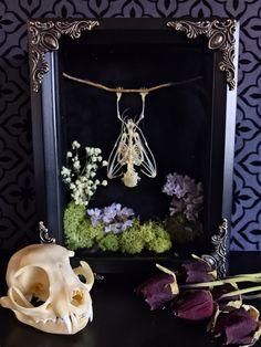 Hanging Fruit Bat Skeleton Forest Shadow Box, Taxidermy, Real Bat Skeleton, Victorian, Memento Mori, Gothic Decor, Preserved Specimen, Oddit by beyondthedarkveil on Etsy https://www.etsy.com/ca/listing/492568455/hanging-fruit-bat-skeleton-forest-shadow