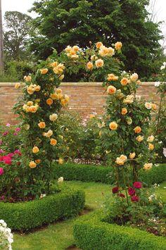 Rosal Crow Princess Margaret