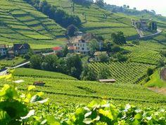 Wineyards inLutry, Switzerland