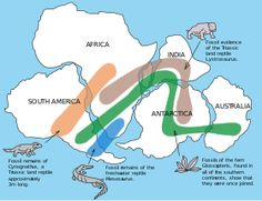 Continental drift describes one of the earliest ways geologists thought continents moved over time. Today, the theory of continental drift has been replaced by the science of plate tectonics. Science Lessons, Teaching Science, Science Activities, Science Education, 8th Grade Science, Middle School Science, Tectonique Des Plaques, 10 Interesting Facts, Earth And Space Science