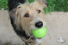 Tucker the dog from Life with Dogs and Cats, loves to play ball.