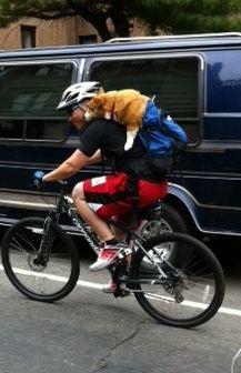 Dog on bike - via Bicycles Network Australia