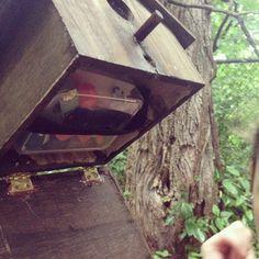 secret compartment under the birdhouse #geocache