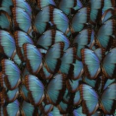Butterfly Cluster by Susan Oliver.