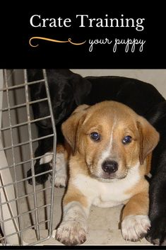 Puppy Crate Training That's Easy as 1-2-3: Help your new friend find a safe place of his own with our dog training tips for crate training your puppy. It's one of the best ways to train your dog. #puppytraininghacks