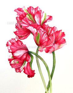 "red parrot tulips print of original watercolor 11"" x 14"", £15.58"