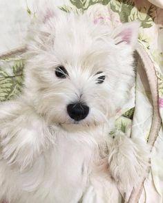 Pinterest photo - #dog