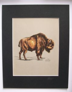 Buffalo Bison Print Gladys Emerson Cook Wild Animal Bookplate 1943 11x14 Matted by VintageVaultPrints on Etsy