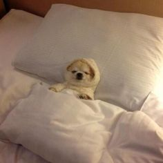 I just gonna stay in bed today - can u bring me extra pillow, pees?