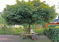 hausb ume f r kleine g rten garten pinterest gardens garten and garden ideas. Black Bedroom Furniture Sets. Home Design Ideas