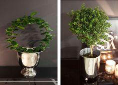 Hoya på bøyle og oppstammet myrt er populære planter som skaper liv i rommet