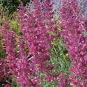 Low Water Plants, Eco Friendly Landscapes: High Country Gardens