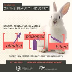 We're giving the beauty industry a cruelty-free makeover with a wave of animal testing bans supported by hundreds of companies and millions of caring consumers worldwide. Stop Animal Testing, Stop Animal Cruelty, Animal Testing Quotes, Vegan Animals, Tier Fotos, Cruelty Free Makeup, Beauty Industry, Animal Welfare, Animal Rights