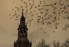 Oslo Domkirke menighet, Oslo, Norway — by Minul Tennakoon. Oslo Cathedral is a nice place to grab some photographs. There are hundreds of pigeons roaming around and I really...