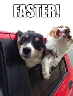 20 Funny Dog Memes - Funny Dog Quotes - 20 Funny Dog Memes Laughtard The post 20 Funny Dog Memes appeared first on Gag Dad. Funny Dog Memes, Funny Animal Memes, Funny Animal Pictures, Dog Pictures, Funny Dogs, Funny Animals, Cute Animals, Animal Humor, Funniest Jokes