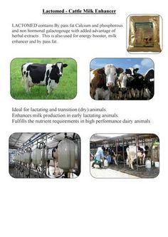 Energy Boosters, Herbal Extracts, Cattle, Masters, Herbalism, Milk, Animals, Gado Gado, Master's Degree