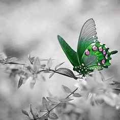 God Bless Us All, Let's Have Fun, Jesus Loves Me, Color Splash, Pictures, Colour, Green, Butterflies, Photos