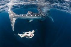 Roberta Mancino Diving Photography – Fubiz™