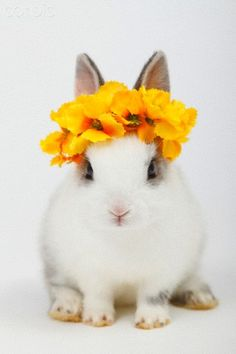 Rabbit sitting with flowers on head against white background