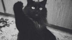Tumblr Animated Black Cat