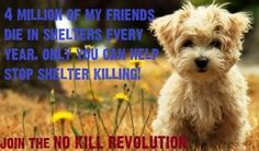 4 million of my friends die in shelters every year.  Only you can help stop shelter killing (the #1 cause of death for healthy dogs & cats in America).  Join the NO KILL REVOLUTION  (https://www.facebook.com/NoKillRevolution)