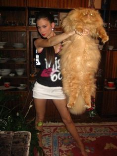 biggest maine coon cat - Google Search