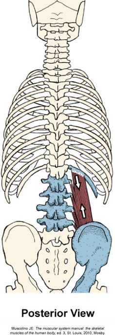 5 Benefits of Chiropractic Treatment - Chiropractic Therapy Yoga Anatomy, Human Anatomy, Chiropractic Therapy, Gross Anatomy, Body Study, Acupressure Treatment, Skeletal Muscle, Muscle Anatomy, Health And Fitness Articles