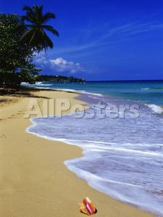 Conch Shell on Playa Grande Beach by Moises Levy Landscapes Photographic Print - 46 x 61 cm