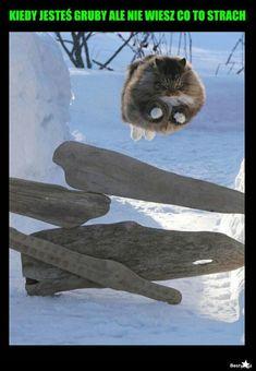 Best Memes, Funny Memes, Hilarious, Polish Memes, Funny Pictures, Funny Pics, Man Humor, Good Mood, Cute Cats