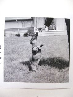 {Sit and Stay, Good Dog} 1960s Vintage Photo