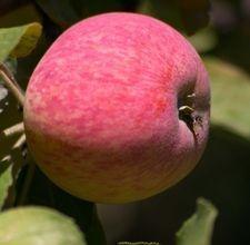 Fruit trees for zone 6b